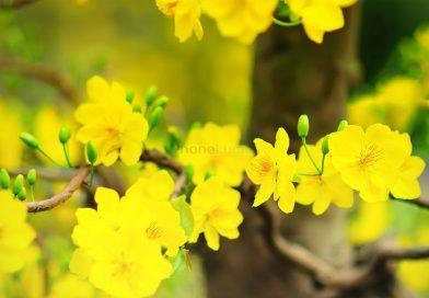 Nhạc chuông Đón Mùa Xuân Về – Bảo Anh